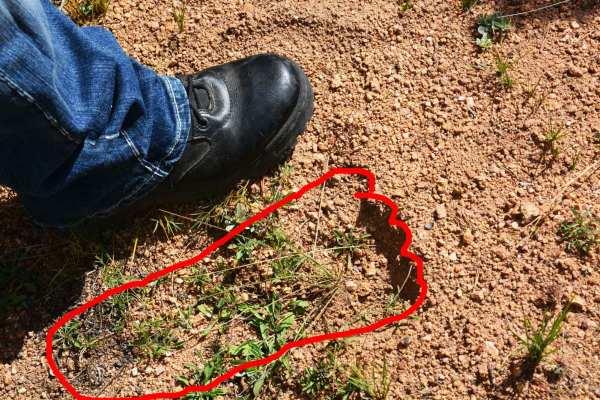 Tracks found at Kenosha Pass, 2015