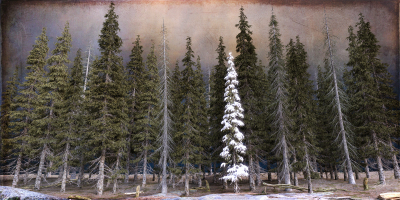 Boreal Forest I