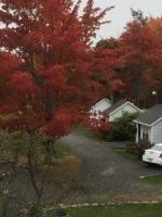 Acadia National Park Fall Colors