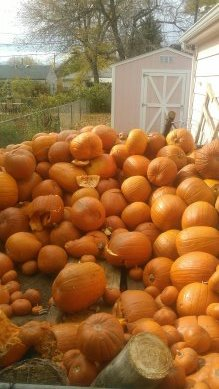 Pumpkin Patch Fundraising Program