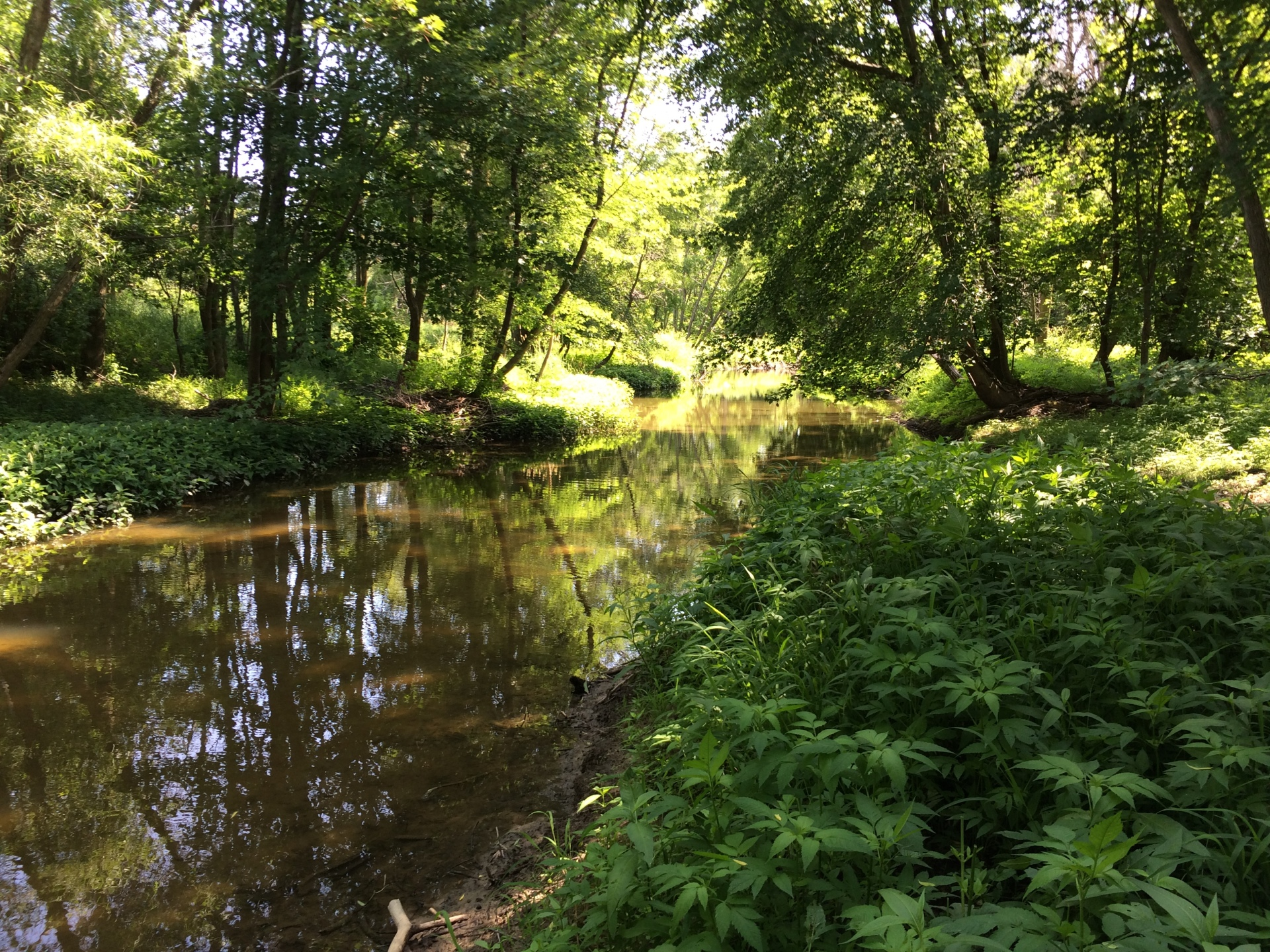 Riparian woodlands stabilize riverbanks and provide quality habitat for plants and animals.