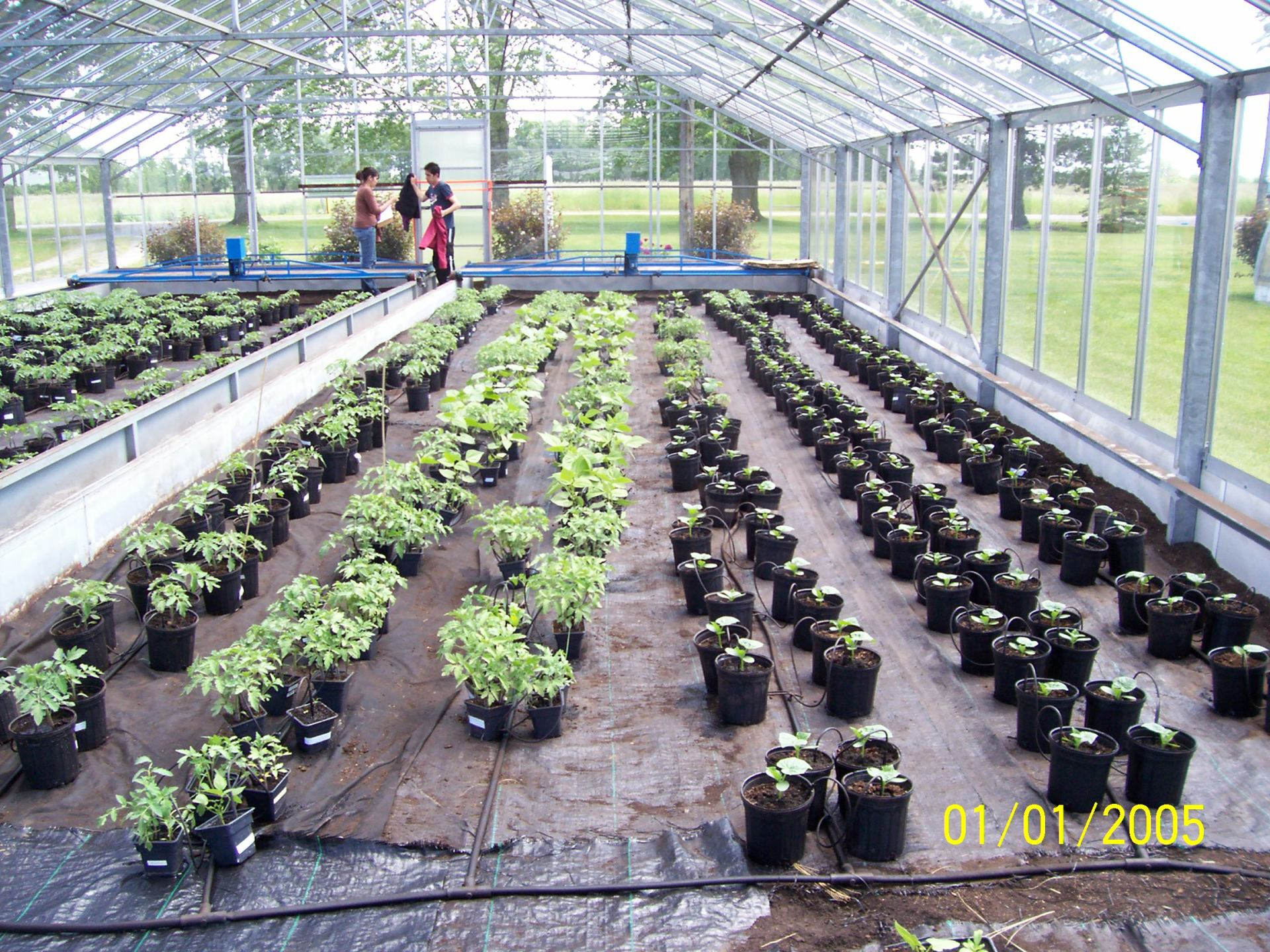 1st Round of Plants of GFP