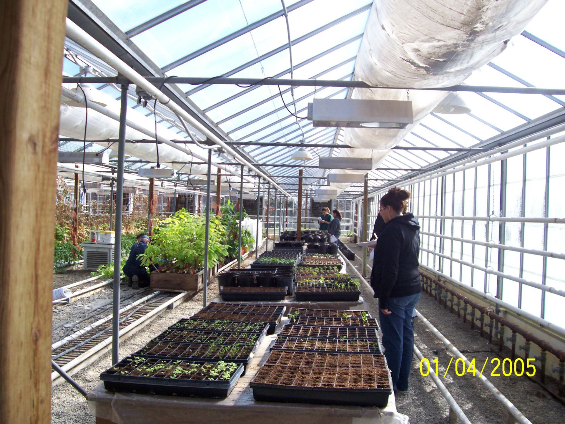 2007 Greenhouse Food Productions at OMAFRA Greenhouse