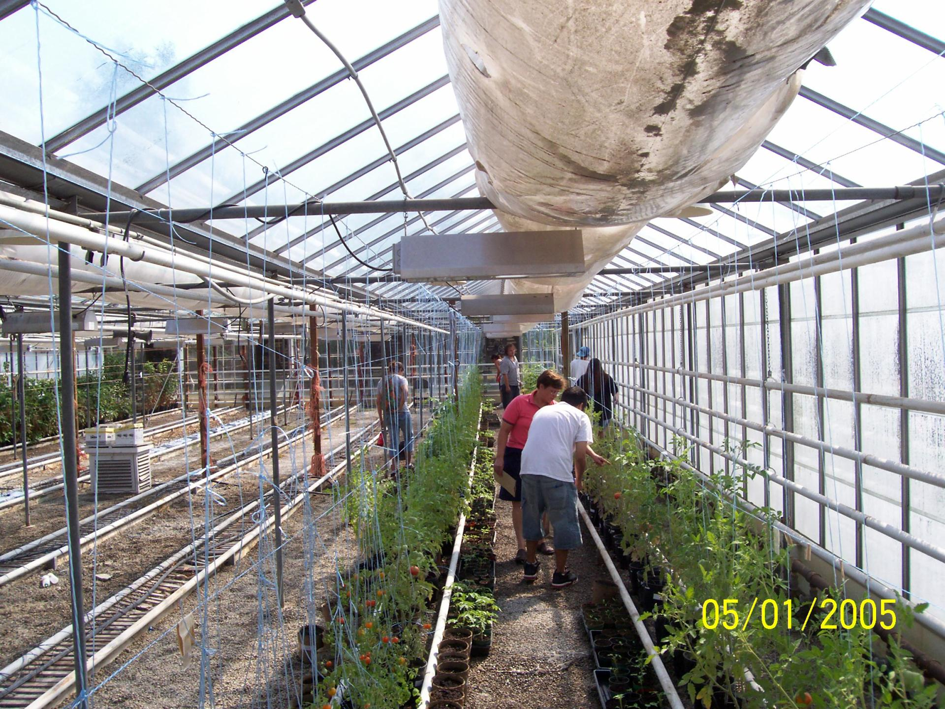 2007 Greenhouse Food Productions - OMAFRA Station