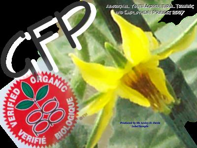 GFP Insignia