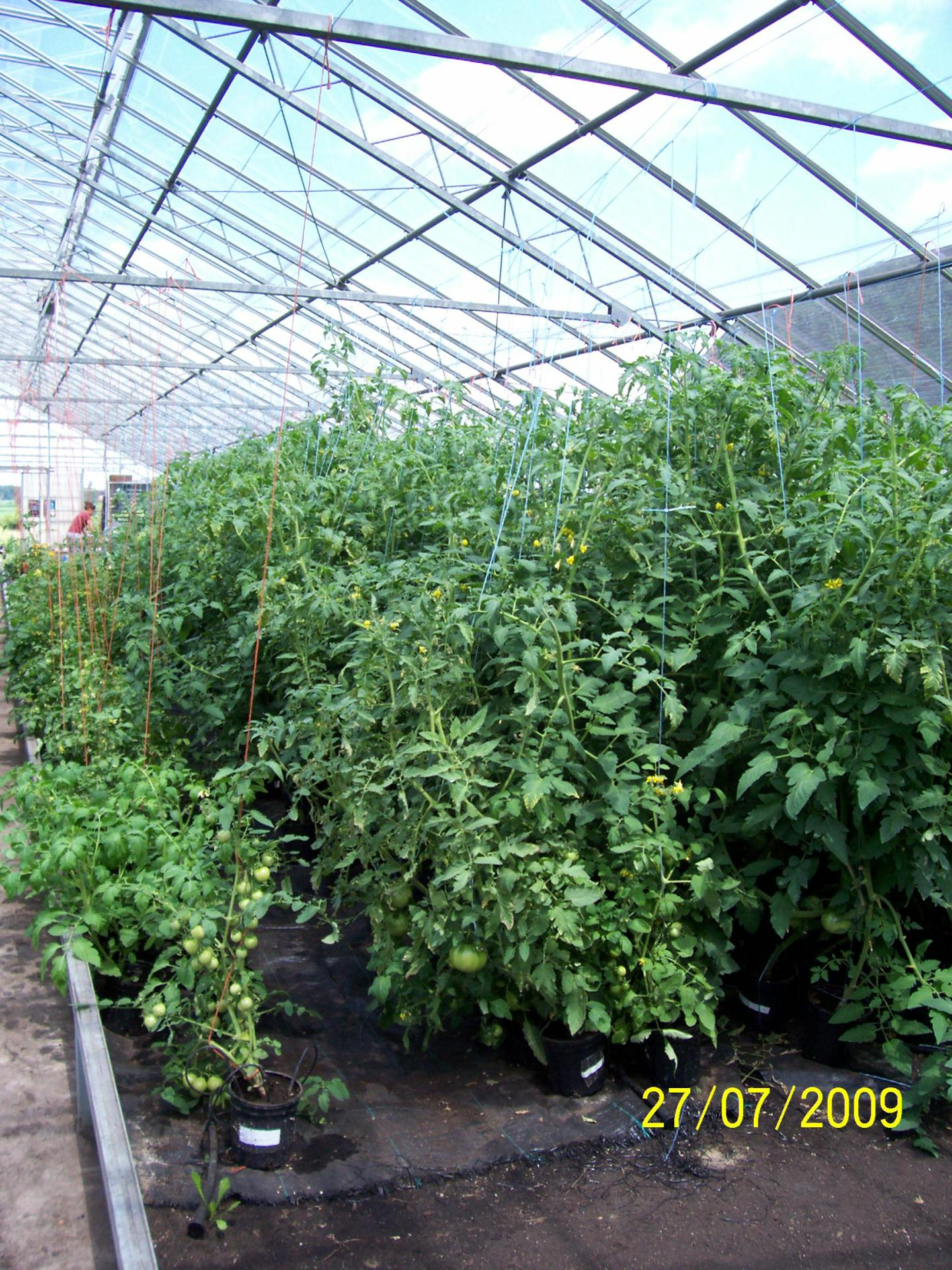 Tall Vine Organic beefsteak training experinece and product line