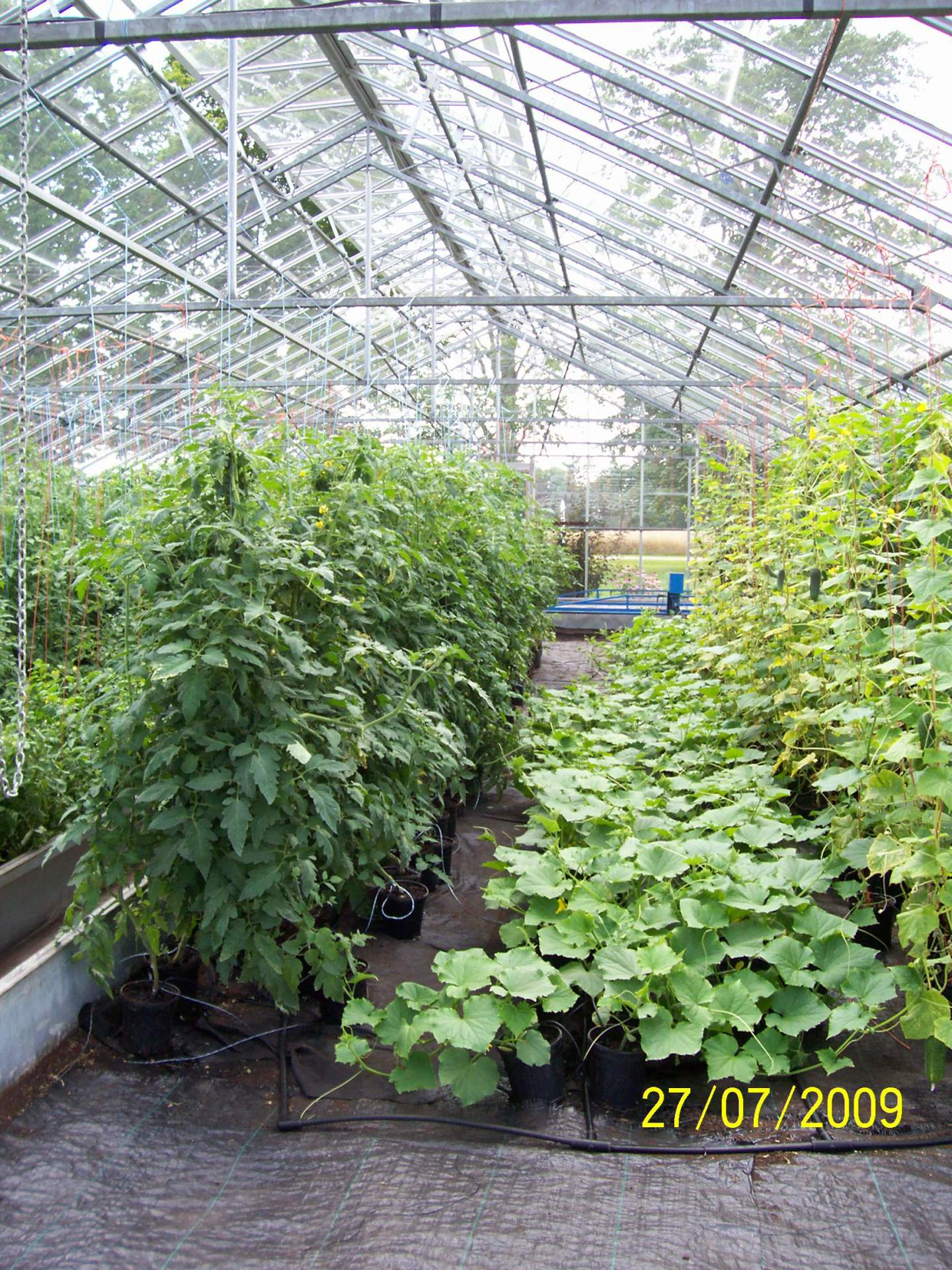 Pickling Cucumber and Tall Vine Tomato Organic Product line of GFP training