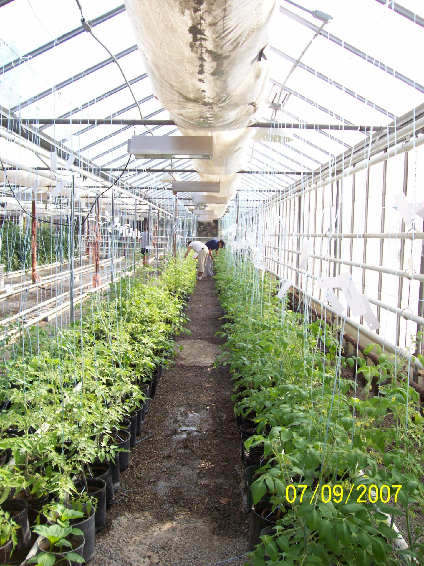 GFP 2007 OMAFRA - Agriculture College - Planting Session