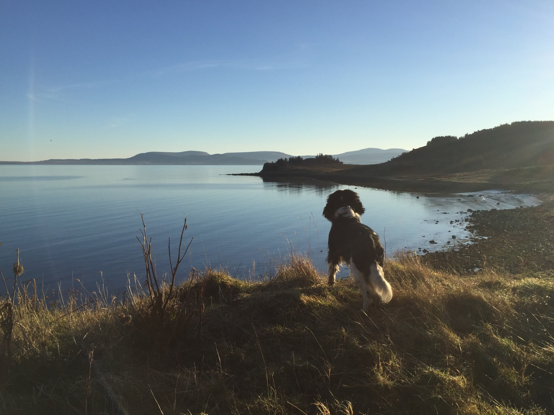Rhumdog admiring the view over Score Bay
