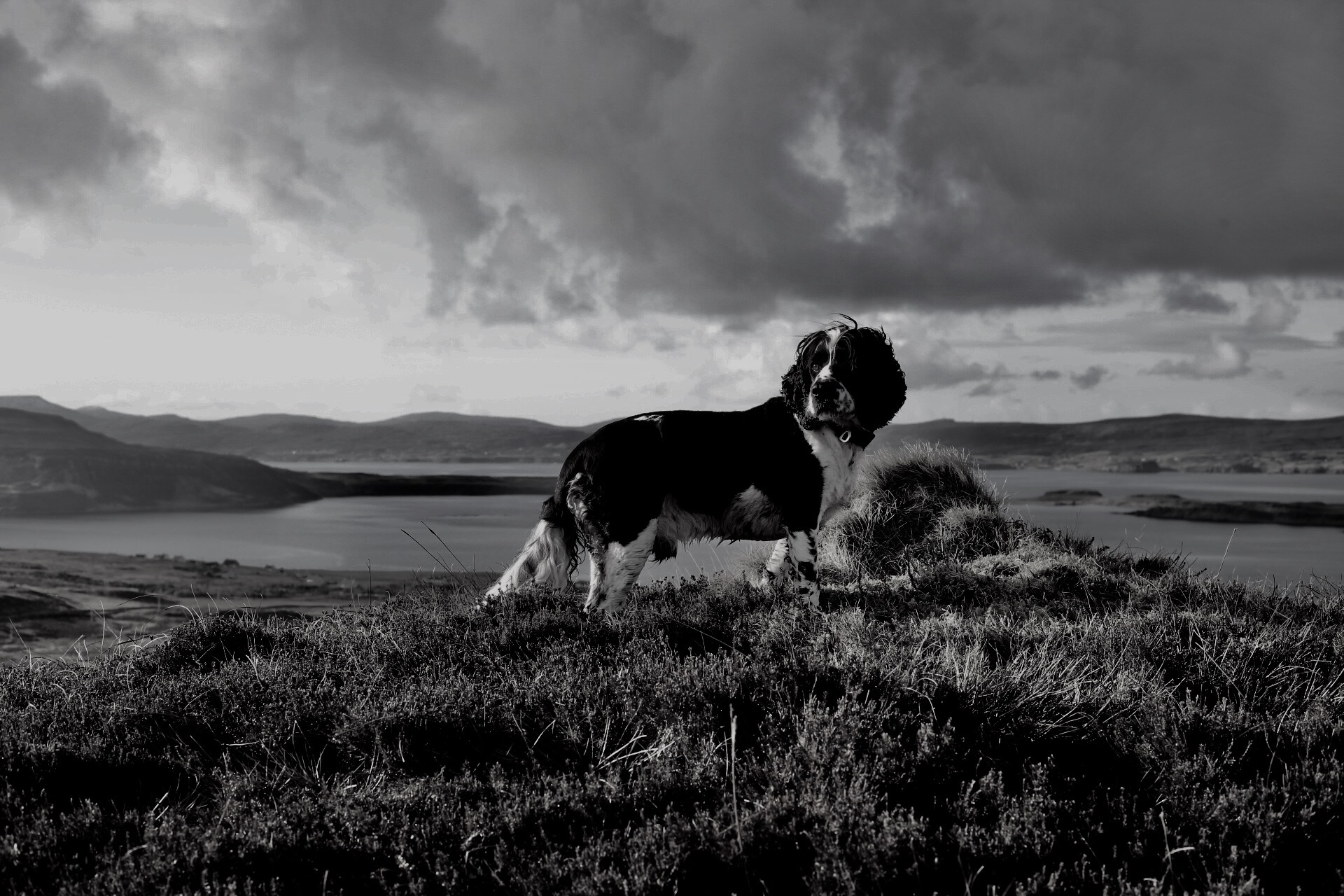 Rhum dog's Guide to Waternish Walks