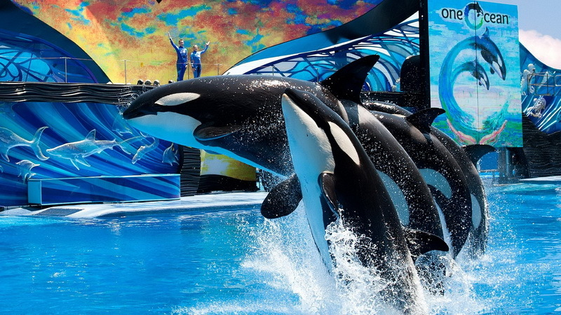 SeaWorld Parks & Entertainment announces leadership changes for Tampa and Orlando Parks