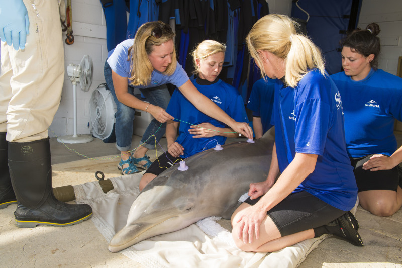 SeaWorld Orlando Facilitates Hearing Test for Rescued Dolphin