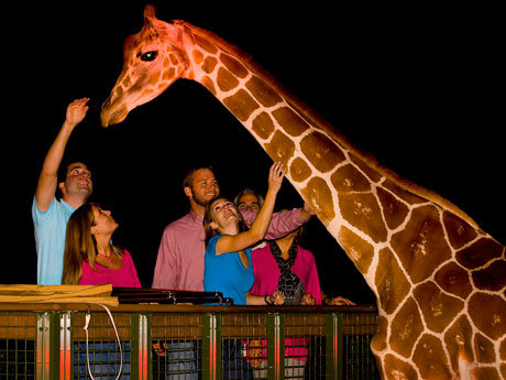 Enjoy After Dark Adventures with the Return of the Serengeti Night Safari