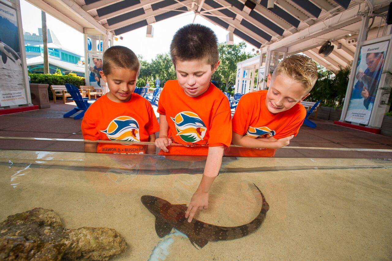 Make a Splash at SeaWorld Camp This Summer