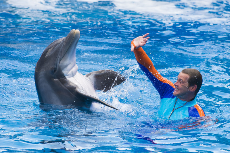 Dolphin Days Premier Kicks Off Wonder-Filled Weekend at SeaWorld