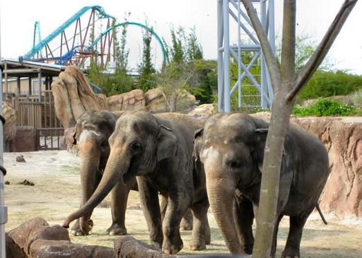 Happy Easter from the Elephants at Busch Gardens Tampa