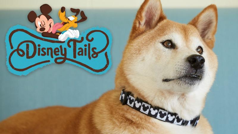 Proud Pet Parent Expands Disney Tails Collection