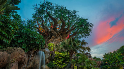 Animal Planet Showcases Disney's Animal Kingdom: Alive with Magic