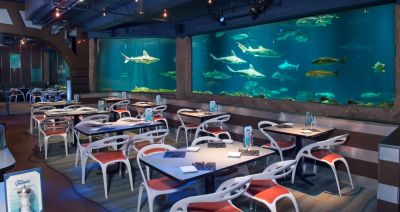 Sharks Underwater Grill Prepares for Visit Orlando's Magical Dining Month