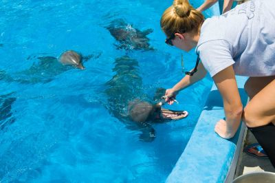 SeaWorld Orlando takes in marine life from Dolphin Connection