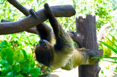 International Sloth Day at SeaWorld