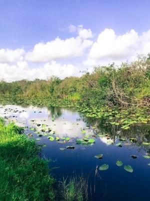 Busch Gardens Partners with the Everglades Foundation Literacy Program