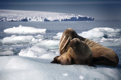 Why Arctic Sea Ice is Important