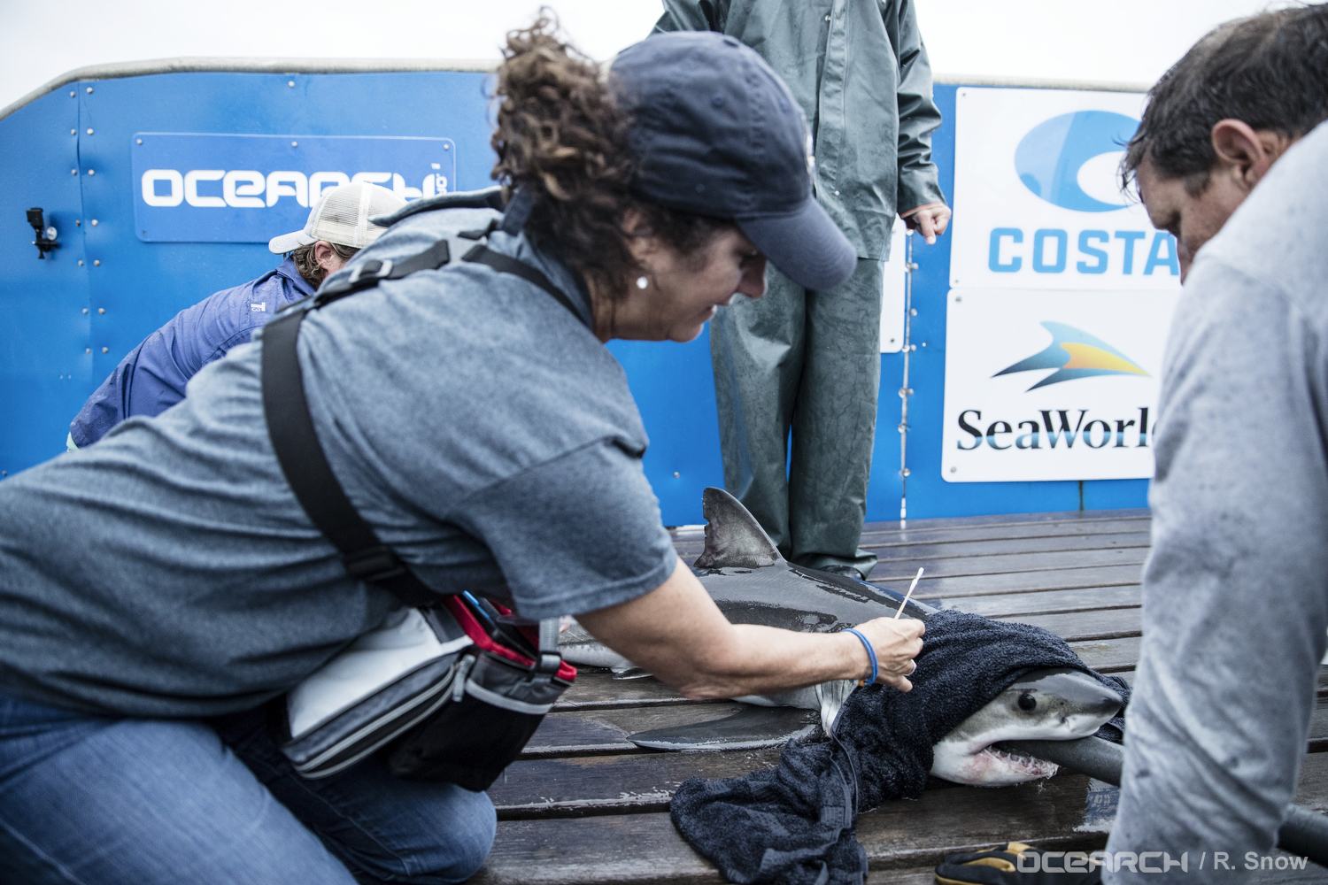SeaWorld and OCEARCH Join Forces to Protect World's Oceans and Marine Animals