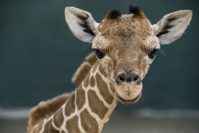 Welcome, Patty! Busch Gardens Tampa Bay's newest baby