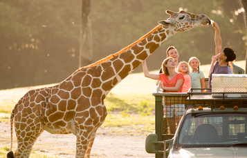 Busch Gardens Tampa Bay has been nominated for two USA TODAY 10Best