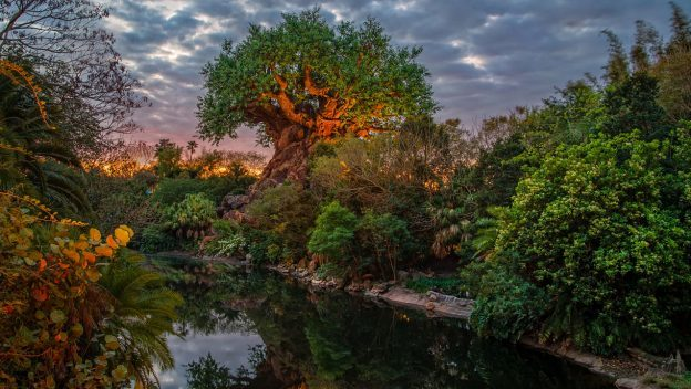 DisneyParksLIVE To Stream Sunrise at Disney's Animal Kingdom August 15 at 6 a.m. ET
