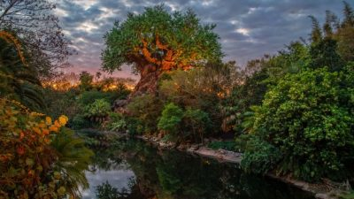 DisneyParksLIVE To Stream Sunrise at Disney's Animal Kingdom August 15 at 6 a.m. ET
