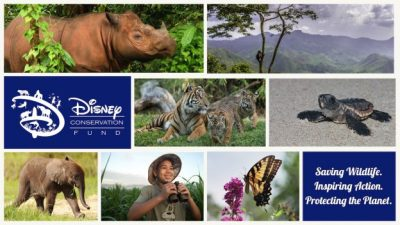 The Disney Conservation Fund Awards $5 Million to Conservation Organizations