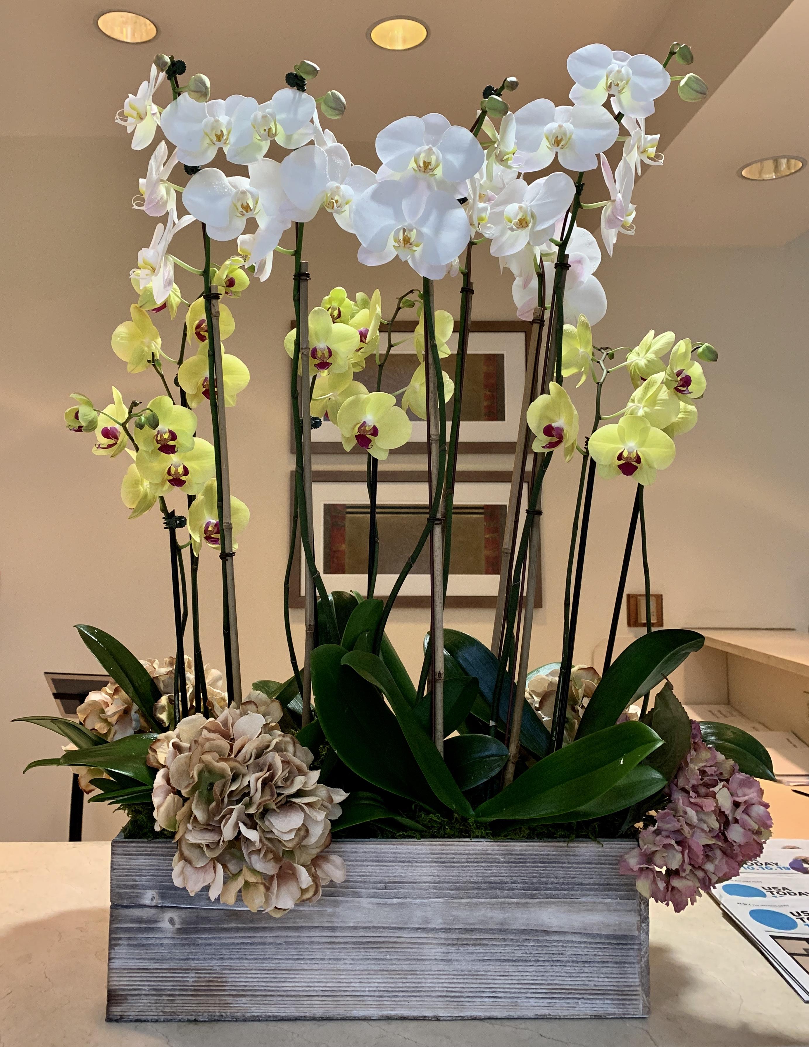 Premium Phalaenopsis Orchids. $329.99