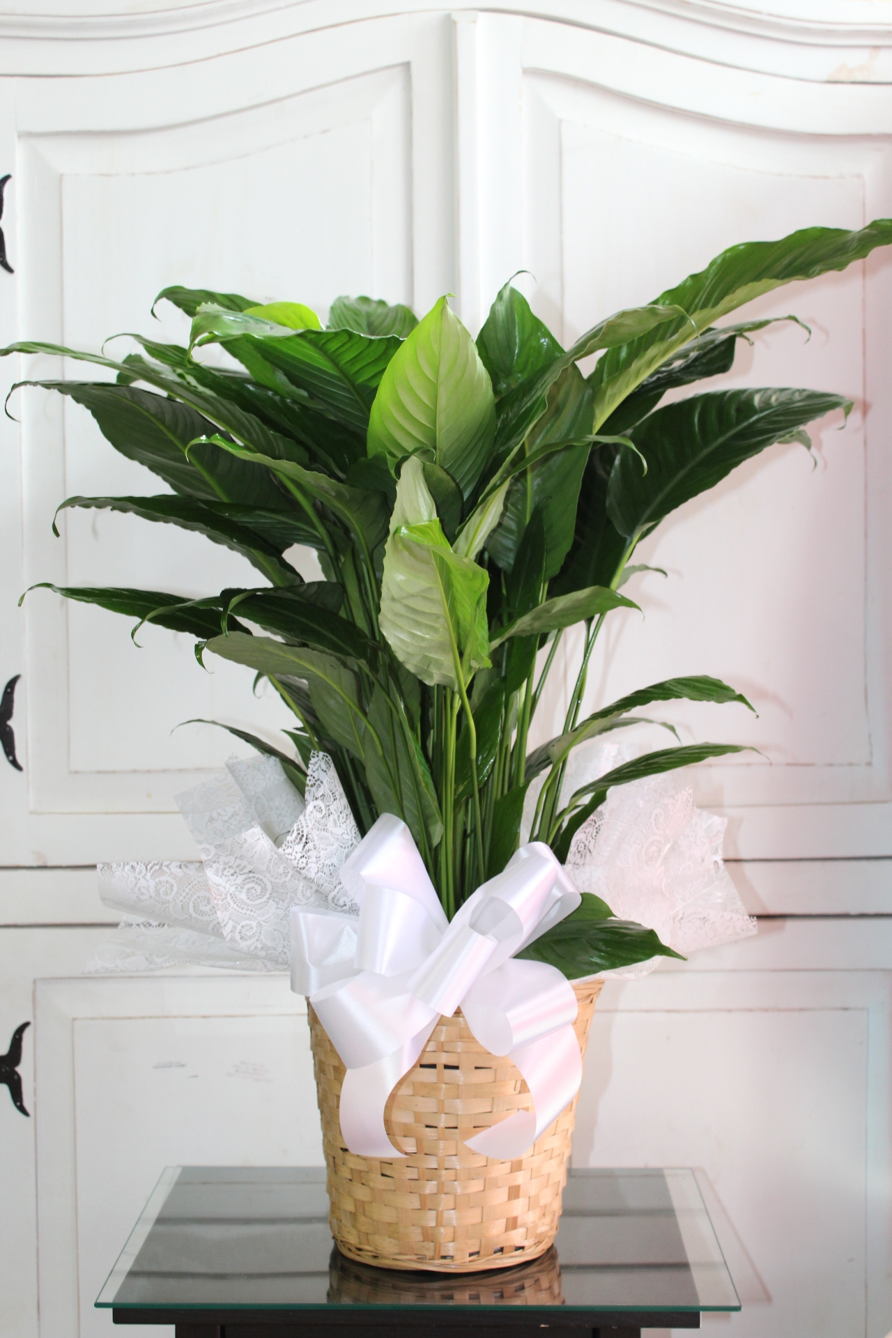 GP-902. Spathiphyllum Plant in wicker basket