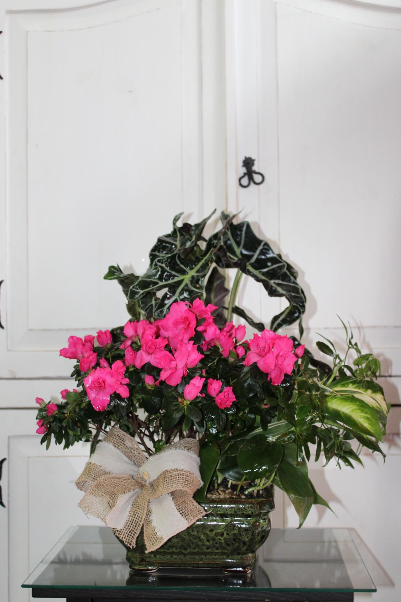 GP-910. Blooming Dishgarden.$69.99