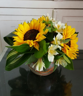 GP-114 . BOWL OF SUNFLOWERS. $49.99
