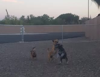 Fur Babies Playing in their new park