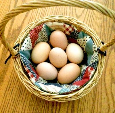 Incubating Chicken Eggs