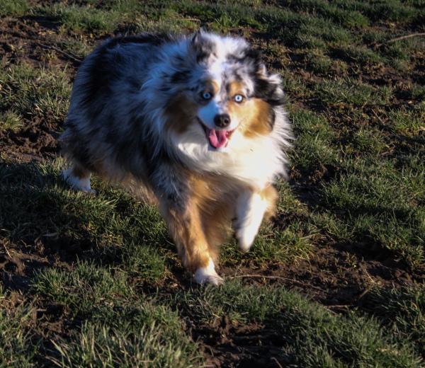 Pet Photography, Pet Portraits, Dog Portrait, Dog Photography, Pet Photoshoot, Happy Dog, Happy Pet, Fluffy Dog