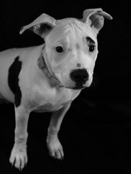 Pet Photography, Pet Portraits, Dog Portrait, Dog Photography, Pet Photoshoot, Happy Dog, Happy Pet