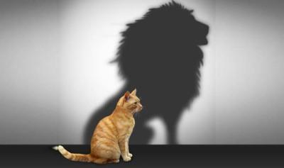 A cat's self image.
