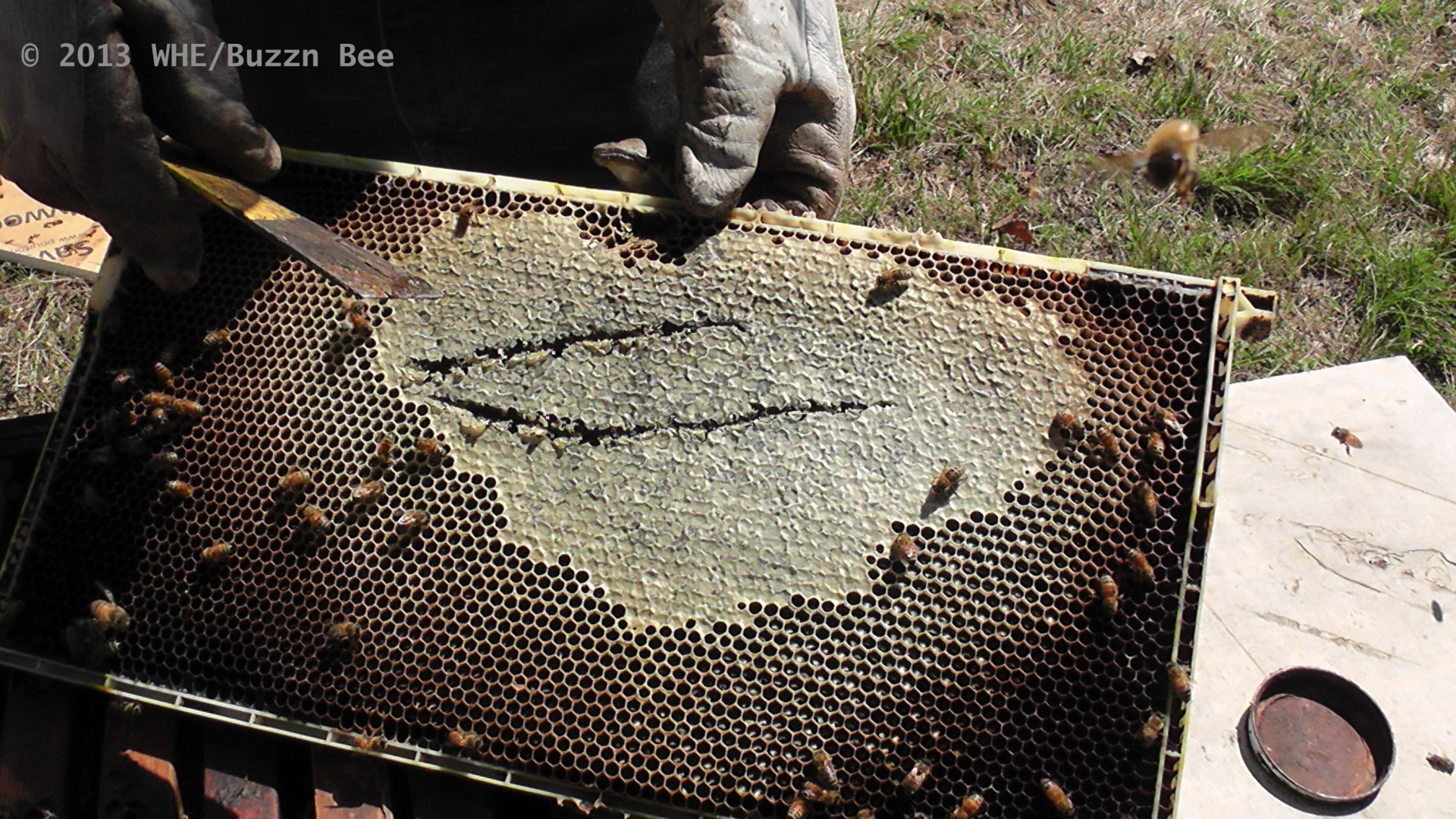 Cells of honeycomb sealed off for storage by bees