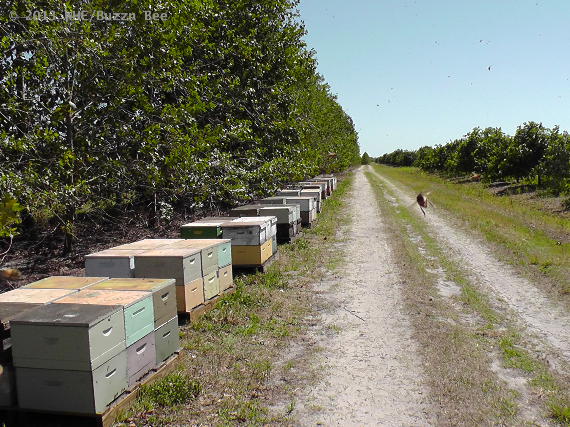 Beehives all in a row