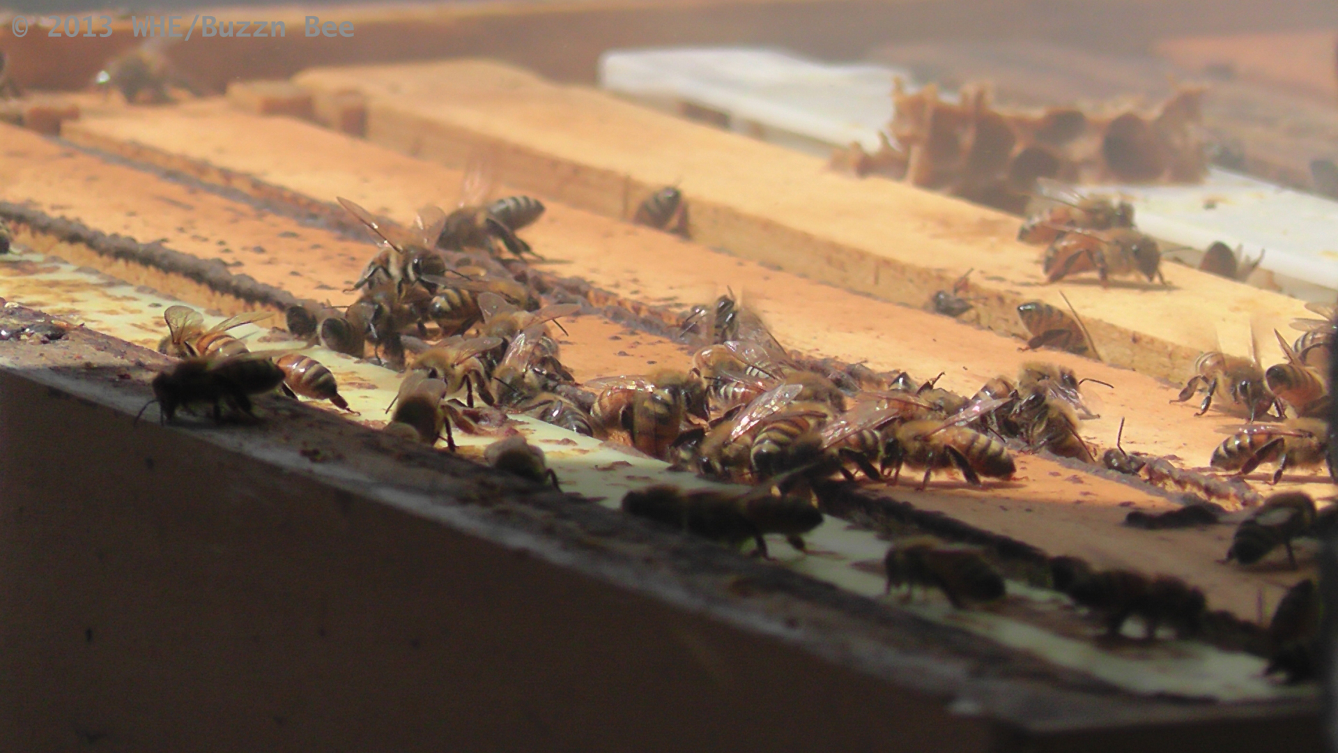 Inside a bee box