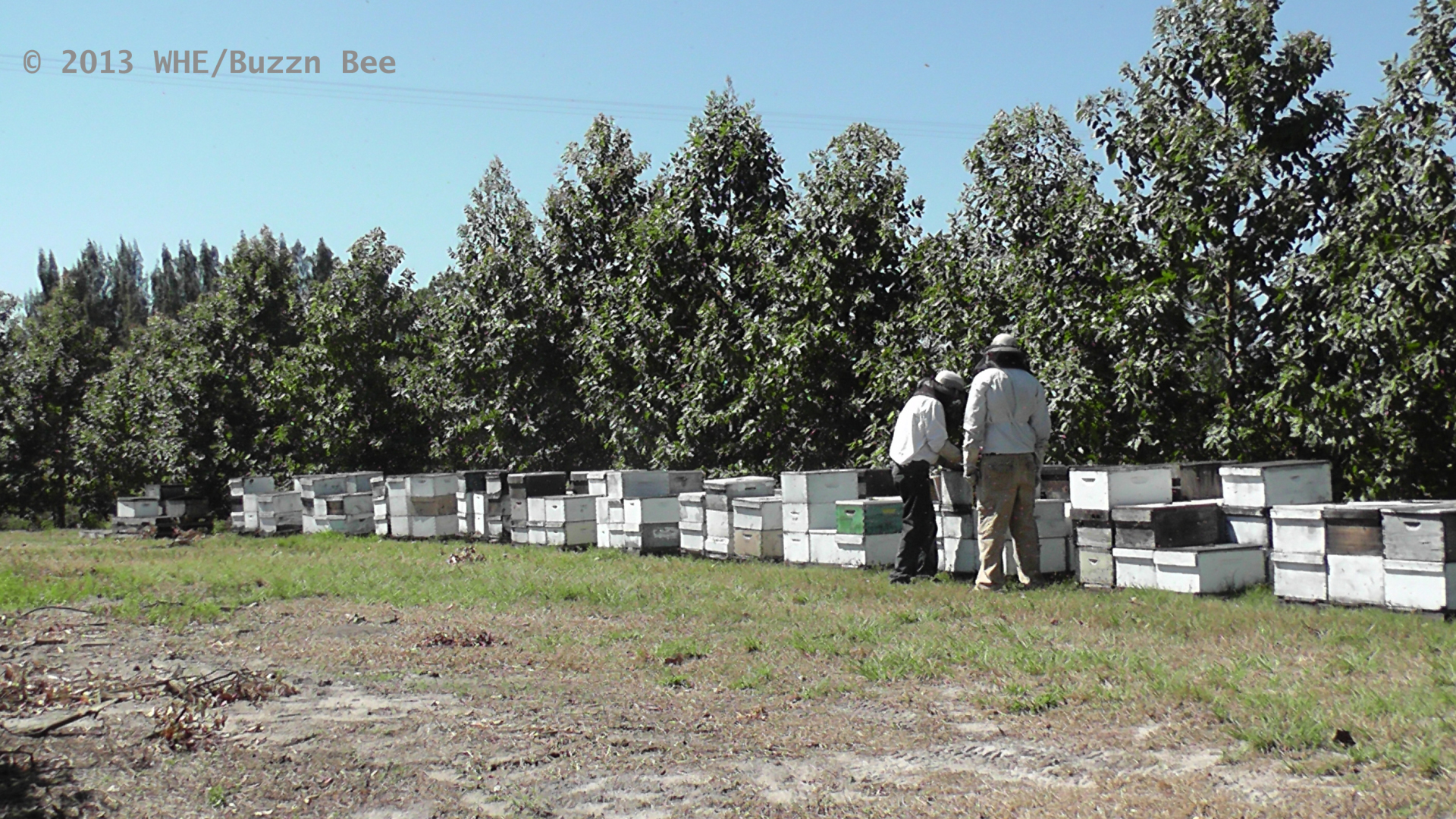 David and Brian inspect the hives