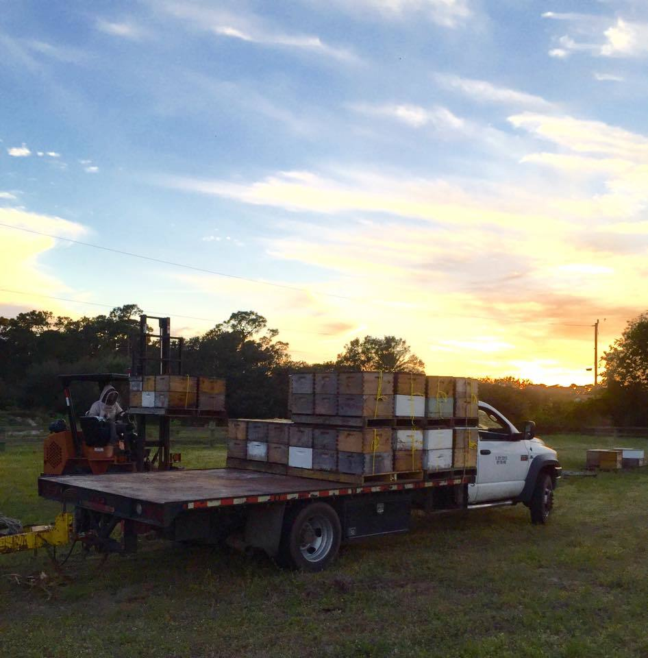 Moving beehives