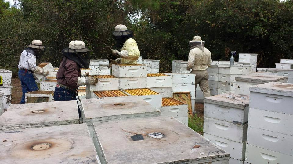 Florida Beekeepers, link to Beekeeping Gallery