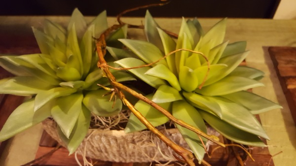 8) Succulents