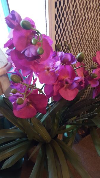 1) Orchids